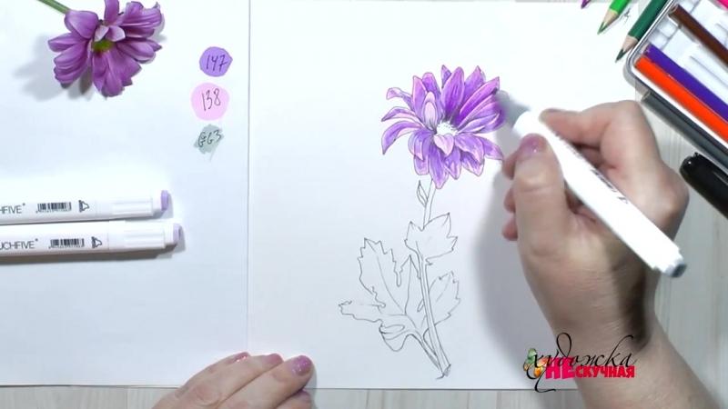 Как нарисовать цветы. Рисуем хризантему маркерами.