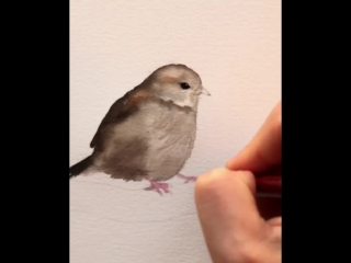 A quick sketch of a little sparrow - one of a flock I'm going to paint this week.Sorry for blurry picture at the beginning as I