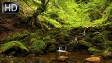 Nature Sounds stream water, calm birds song for sleep, sound forest