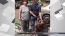 Собака якого врятували із крижаного Псла знайшов господарів