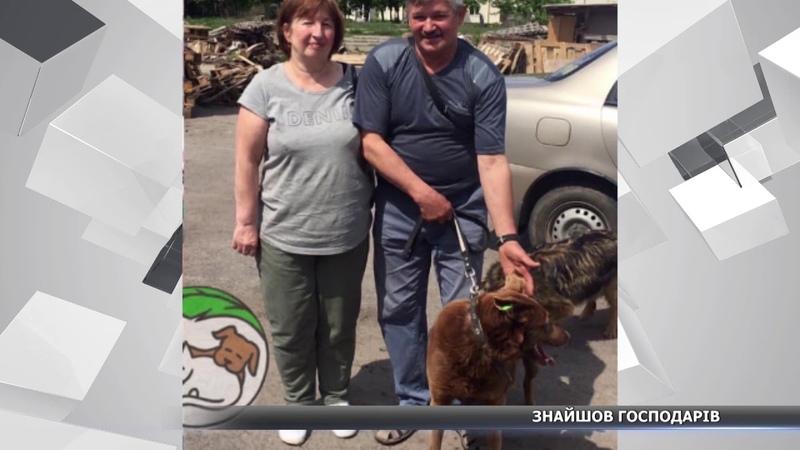 Собака, якого врятували із крижаного Псла, знайшов господарів