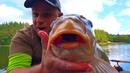 Рыбалка на трофейных карпов и амуров осенью! Погонял щуку на ратлины и колебалки! Часть 2