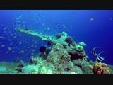 3 часа красивых коралловых рифов рыбы, расслабляющий океан рыбы