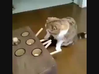 Как надолго занять кота (240p).mp4