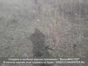 Коп 11.02.2019 Девять монет, крестик и душевный человек!