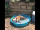 Спасение от невыносимой жары