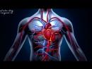 КРОВЬ. Кровеносная и кроветворная системы организма - самое главное кратко! Знай и ЖИВИ!.mp4