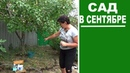 Работы в саду в сентябре Поливы подкормки обработки от болезней и вредителей