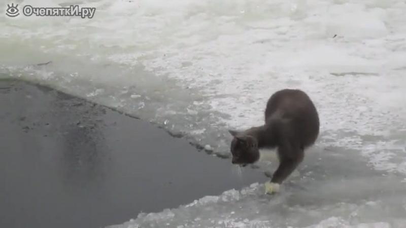 Кот поймал рыбу в проруби