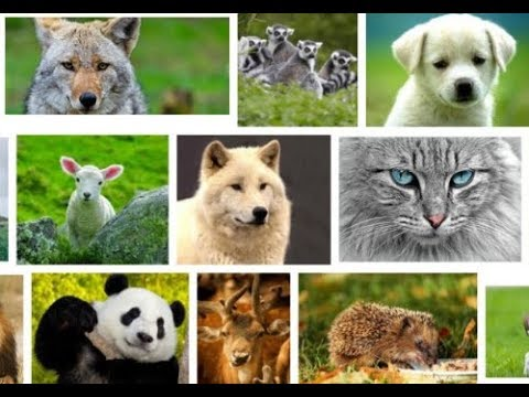 Our cute animal friends / sevimli hayvan dostlarımız🛩👏💕🌙💥🙋♂️🌹🎃😊⚡🛵