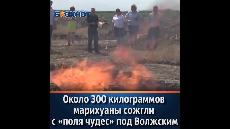 Около 300 килограммов конопли сожгли с «поля чудес» под Волжским