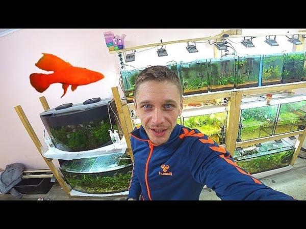Пересадил меченосцев в другой аквариум