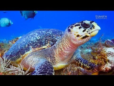 Подводное приключение у острова Косумель
