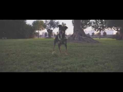Dji Ronin S Sony a6500- Dji Ronin S Cinematic Drone