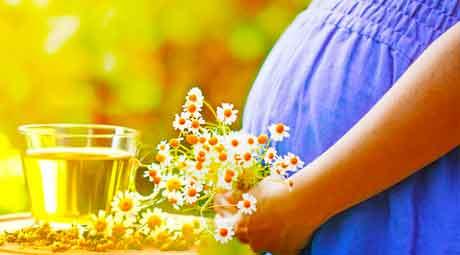 Стоит ли использовать ромашку во время беременности?