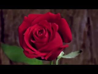 Заказ букетов к 8 марта. мир цветов|новый уренгой.8(932)053-16-76