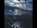 Идем ловить волны