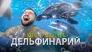 ЭТИ ЖИВОТНЫЕ ПОЗВОЛЯЮТ СЕБЕ ВСЁ Хочу работать в дельфинарии Дельфинотерапия