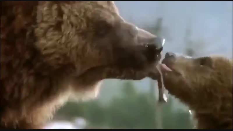 Убийство спящего медведя