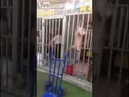 Meat vendors locked in cages to do business in Uighur Muslim region