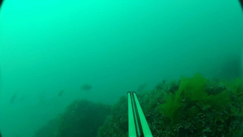 подводная охота. Горбыли. Мыс фиолент. 26.07.2012