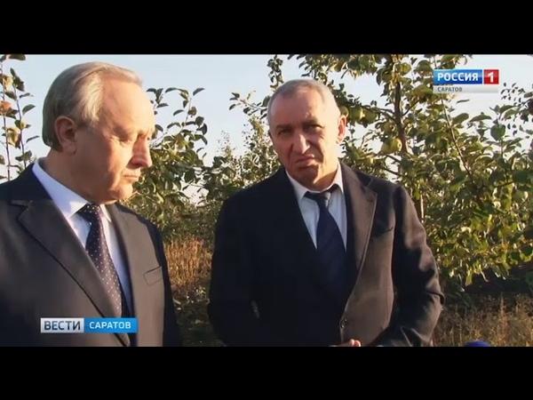 Еще триста гектаров яблонь заложили в Ртищевском районе
