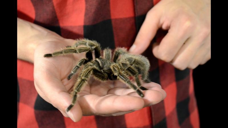 Обзор выставки Удивительный мир пауков в Алабина