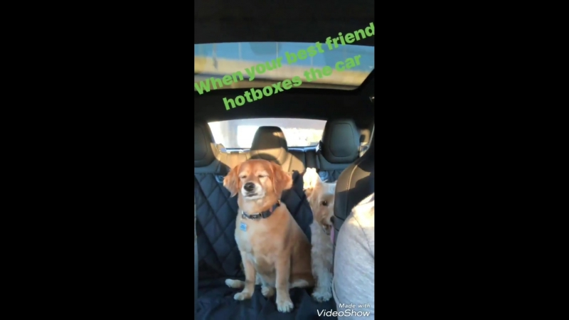 Father and son road trip...@BrandinPhillips, Sammy, @HarryShumJr Charlie...FridayFunday - - SaveShadowhunters