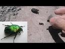 Гравитация крыльев майского жука проверка тест