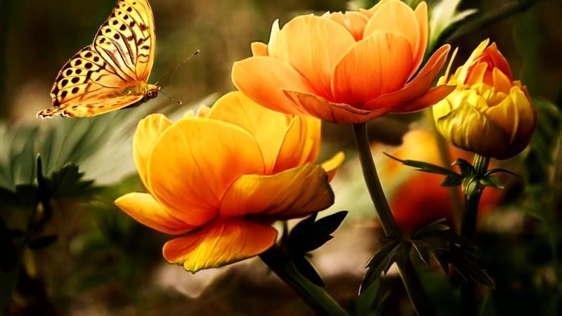 10 наставлений Пророка Мухаммада МУСУЛЬМАНКАМ.mp4