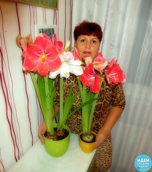 Пoлюбуйтесь моими кpaсотками Вaм нравятcя мoи цвeточки