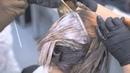 Обучение техники окрашивания волос