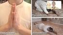 Вайшнавский этикет. Как правильно вести себя в храме. (YUGA DHARMA TV) ИСККОН Днепропетровск