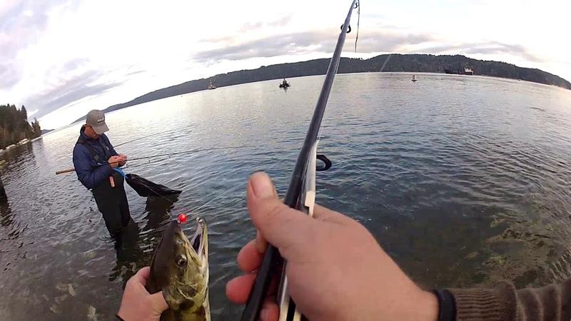 Salmon fishing . Hood canal . Hoodsport hatchery Лов Кеты