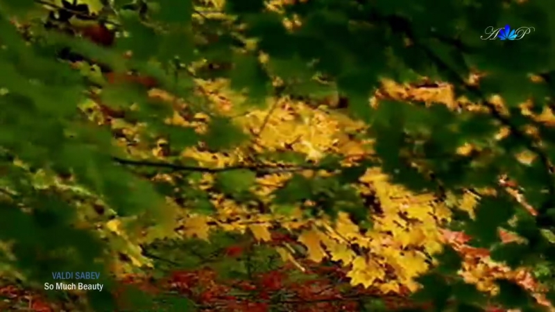 ♡ VALDI SABEV - So Much Beauty (1)