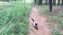 Симба. Дневник кота 2. Прогулка в лесу.