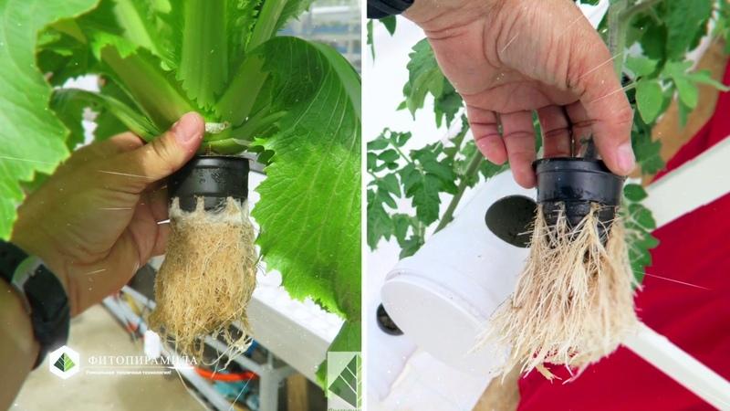 Фитопирамида - 2в1: Аэропоника гидропоника - рост растений х2