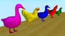 Learn Colors Learn Animals Goose Chicken Duck Rooster Dove eat Fish Cartoon for Children