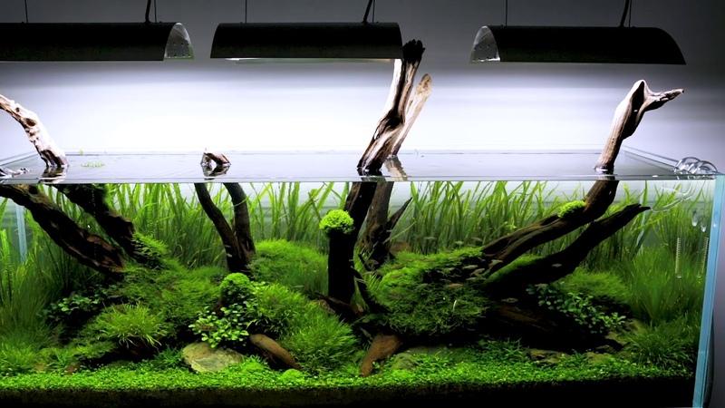180cm Nature Aquarium, classic style