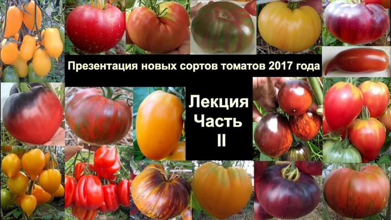 Лекция (Часть II) Презентация новых сортов томатов 2017 года