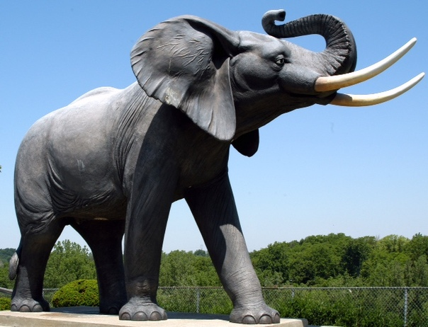 Самые известные в мире слоны и их трагические судьбы Слоны и без того заметные животные, но есть среди них особенно известные, которые прославились на весь мир. Увы, как и у людей, у животных