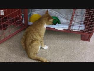 Без операции кошка не сможет ходить!