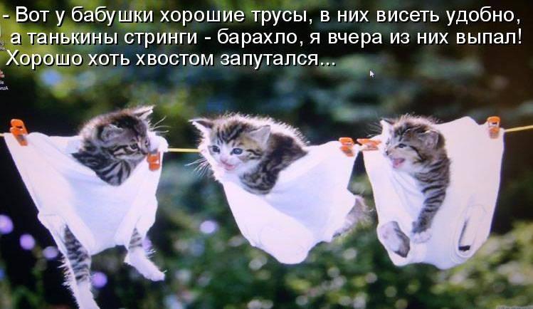 https://pp.userapi.com/c850024/v850024213/f39cf/bIB4XoCrQvA.jpg