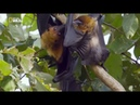 Мир Дикой природы джунгли Азии серия №6