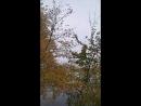 VID_234101224_000900_980.mp4