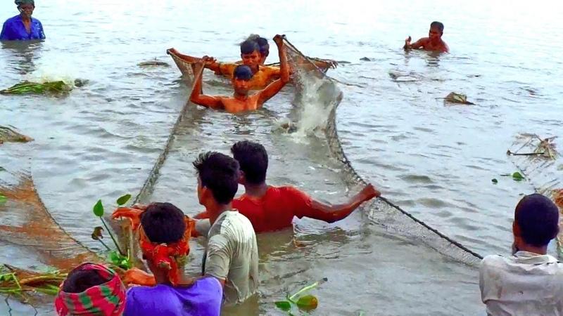 Fishermen Traditional Cast Net Fishing Video Huge Pangush Fish Of Large lagoon True Nature