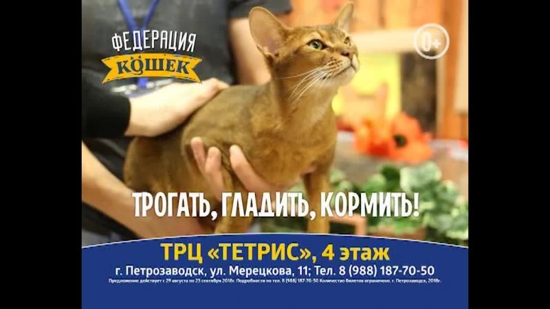 Выставка кошек в Петрозаводске