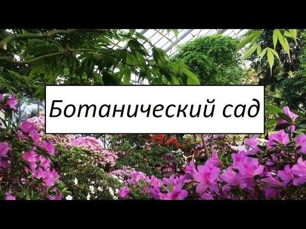 VLOG 23. В Ботаническом саду зацвела сакура. Санкт-Петербург, март 2018.