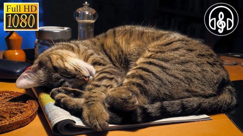 Лучшая Расслабляющая Музыка для Кошек 1 Час Сна