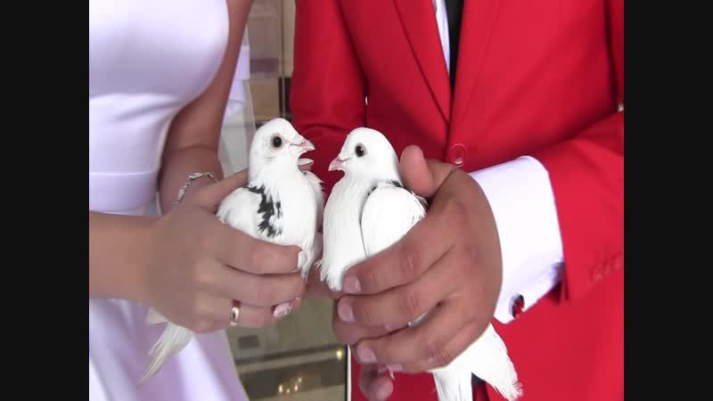 Свадебный ролик для Вячеслава и Аиды.(видеограф Гаделшина Амина,тел-89274615591)
